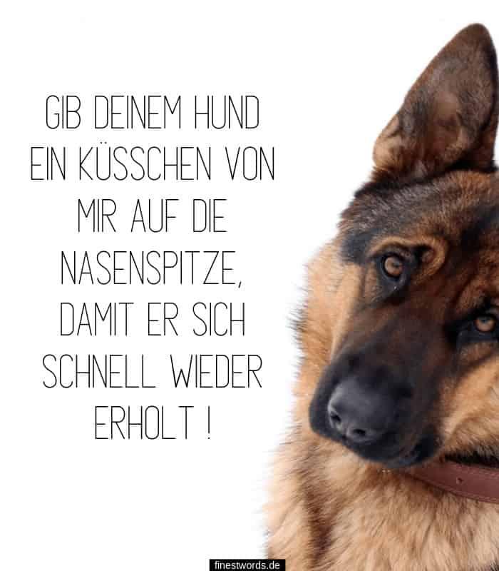 Gute Besserung für Hund