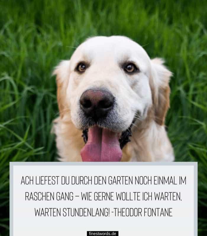 Trauerspruch Hund