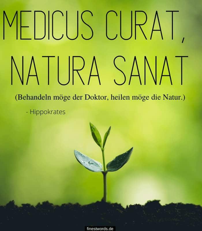 Medicus curat, natura sanat - Behandeln möge der Doktor, heilen möge die Natur. - Hippokrates