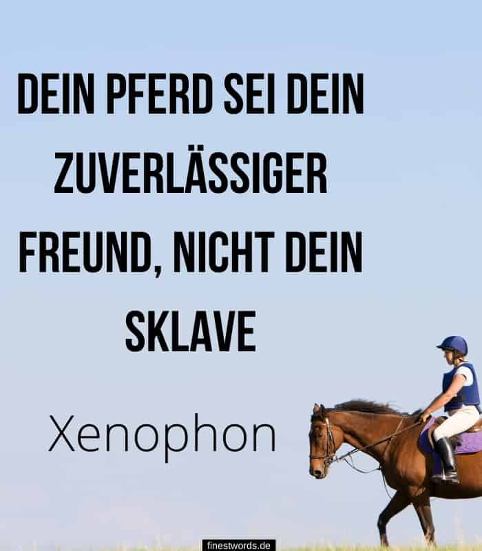 Dein Pferd sei zuverlässiger Freund, nicht dein Sklave -Xenophon