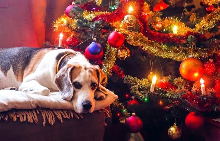 Weihnachtswünsche für Hundebesitzer