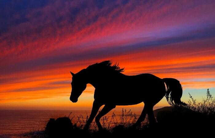 Trauersprüche & Gedichte für Pferde