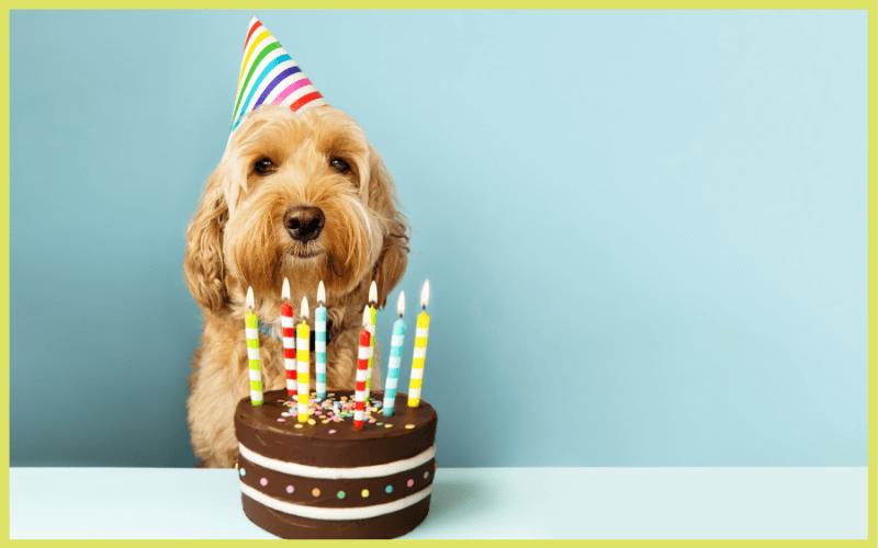 Lustige Sprüche für Geburtstagseinladungen